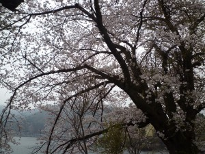 チャレンジ富士五湖 ウルトラマラソン100キロ完走レポート