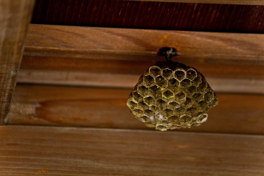 マラソン大会中に115人が蜂に刺された!蜂の対処方法について